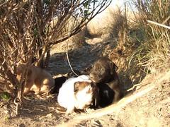 DSCF0628 (geeplums) Tags: rancho 2007 ferrer