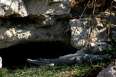 Croc Cave
