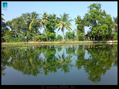 Reflecting the Truth (:: niKk clicKs ::) Tags: india reflection green nature water nokia village kerala ilp backwaters coconuttrees alleppey nikk alappuzha godsowncountry kuttanad n73 anawesomeshot mankomb picnikk reflectingthetruth