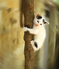 Scared kitten (jimiliop) Tags: blur tree cat gold kitten little quality background save dirty sharp loveit climbing help seal learning dizzy scared inspire soe radial smrgsbord aclass supershot mywinner abigfave kissablecats bestofcats diamondclassphotographer flickrdiamond lunarvillage ysplix platinumheartaward betterthangood theperfectphotographer rickspixtop50 avision