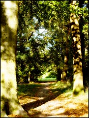 The path (Kirsten M Lentoft) Tags: autumn trees sunlight fall denmark path memory byparken naturesfinest glostrup mywinners abigfave anawesomeshot momse2600 treesubject diamondclassphotographer kirstenmlentoft