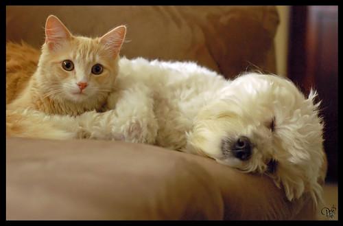 Cuddling Friends