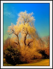 """Beautiful Willow"" (my4otos) Tags: trees art nature nova interestingness nina bushes brooklynbotanicgardens blueribbonwinner weepingwillowtree mywinners abigfave anawesomeshot aplusphoto wowiekazowie theunforgettablepictures onlythebestare excapture thatsbostin unlimitedphotos novaphoto"