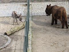 little donkey big donkey