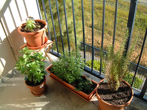Herb Garden as of 4-24