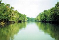 Sundarbans forest