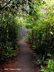 Rainforest Misty Track at Best of All Lookout - Springbrook National Park (Black Diamond Images) Tags: rainforest mistytrack bestofalllookout springbrooknationalpark queensland track iphone7plus iphone