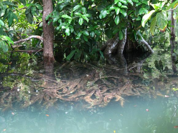 Tha Pom Khlong Song Nam - Nature Walk