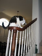 Hmmm, what do I see? (primadonna926) Tags: goofy cat stair banister railing skeeter