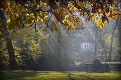 Vondelpark Amsterdam (siebe ) Tags: autumn sun holland love dutch amsterdam couple herfst nederland thenetherlands vondelpark