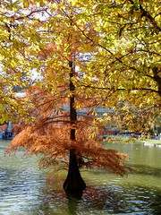 gold and red (bozenqa) Tags: madrid autumn trees espaa fall water spain otoo retiro naturesfinest retiropark mywinners bozenqa