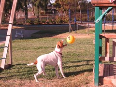 Lester playing tetherball