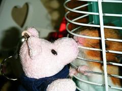 20071227 - 03 (kayako_) Tags: hamster pon