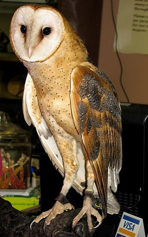 barn owl wbs visitors center