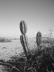 Cactus (Aztlek) Tags: travel cactus blackandwhite bw naturaleza blancoynegro ilovenature blackwhite colombia desert negro paisaje bn arena cielo desierto seco lanscape calor sudamerica tierra espinas vegetacion guajira blancoynegroblanco lifetravel dwcffbw