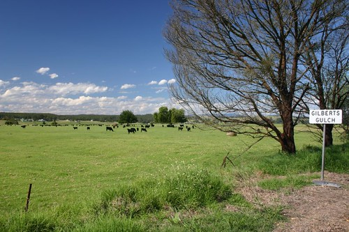 Rural scenery near Marlo, VIC.