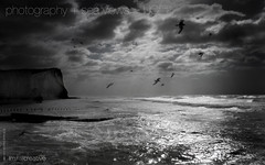 1344x840px  Stormy English Weather Seaford Beach Desktop Photo (imjustcreative) Tags: wallpaper seagulls beach landscape photography coast desktoppicture seaford desktoppictures desktopphoto roughsea stormyseas desktopphotos seafordhead