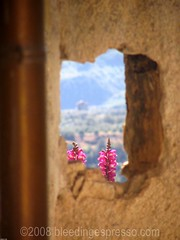 Hole in the wall (Michelle Fabio) Tags: wildflowers calabria southernitaly badolato