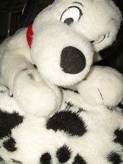 Spotty Dog on Spotty Pillow