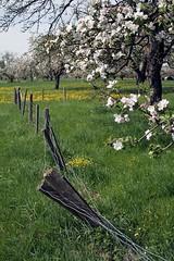 The Spring... (modd3r) Tags: eislingen nhrhfe