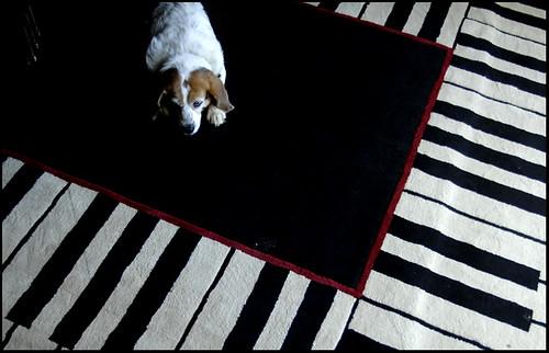 Piano Pup