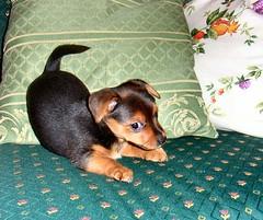 Nina (Rosa Gamboias) Tags: friends dog chien baby amigos dogs cane friend babies hond perro hund cães perros chienne nina cachorros bébés chiens perrita perra cachorrinha puppie crias cãezinhos