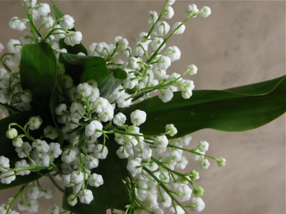 lily of the valley botanical diagram 012