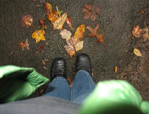 Wet Fall Morning