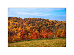 H o m e (ladyLara ( Laura Blc )) Tags: blue autumn light red sky laura green fall love nature colors beauty up forest nikon view memories simplicity cs senses leafs symphony cluj clujnapoca roumanie fillings yep cnd thebestplaceonearth simplethings d80 nikond80 ladylara infinestyle balcesti thegoldenmermaid laurabalc laurablc blc