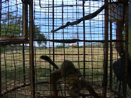 Hyperactive primate