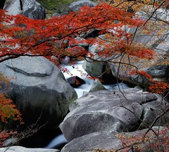 Stream (BlueSkyinBY) Tags: autumn red color tree fall nature water leaves rock japan creek river leaf maple nikon stream foliage momiji d200 yamanashi shosenkyo chichibutamanationalpark superbmasterpiece