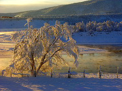 Octobertree,Tana,Lapland,Arctic Norway (elysea100) Tags: winter sun snow tree water norway river october bravo freezing arctic lapland tana finnmark abigfave anawesomeshot superbmasterpiece infinestyle diamondclassphotographer