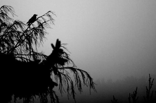Birdie in the fog