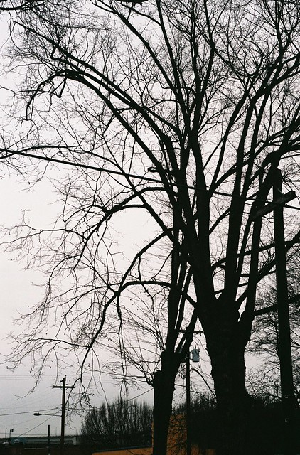 winter trees, northwest portland