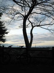 冬の夕方ライド