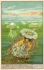 meduse 1