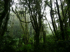 Cloud forest Santa Elena (**lk*) Tags: costarica santaelena nevelwoud