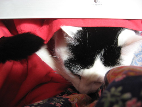 Loki under the keyboard