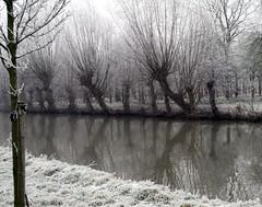 Willows everywhere (robelsas) Tags: winter cold holland water netherlands river nederland rime nieuwegein kou rivier hollandseijssel rijp blueribbonwinner mywinners superaplus aplusphoto photofaceoffwinner platinumheartaward
