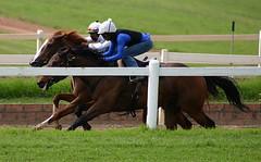 Shongweni racing training (neulands) Tags: horse training cheval racing pferde thoroughbred tb racecource shongweni