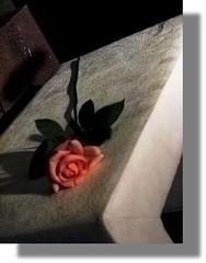 Listen...this is true! (♡ Popotito ♡) Tags: pink flower verde tallo love rose real found grande stem long magic flor rosa linda hermosa rosada milagro magia tru encontrada platinumphoto anawesomeshot mirable superbmasterpiece popotito