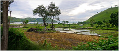 rice plantation (panorama) (Marc-Andr Jung) Tags: panorama sumatra indonesia laketoba riceplantation tongging