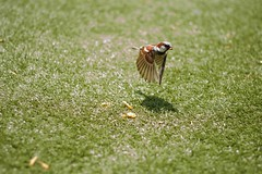 The reward (wondermade) Tags: bird 50mm raw awesome sparrow wren f18 birdinflight platinumphoto theroadtoheaven