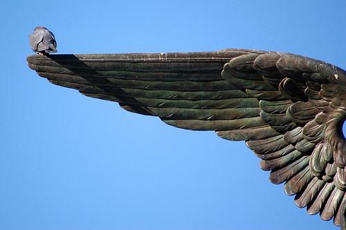 Angel Wing by laverrue.