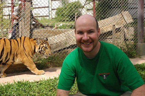 Clearly these 10-month old tigers are *not* drugged