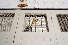 Cage (jobChaowadee) Tags: bird cage caging cruel animal bangkok thailand