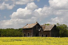 Open House (Also on the Prairie) (John H Bowman) Tags: canada abandoned july saskatchewan 2008 weatheredwood oldhouses blueribbonwinner prairiesky canon24105l canolafields