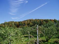 Pommes (Jauny) Tags: apple pommes oka pomme