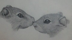 Muskrats (Wendilove) Tags: art animal illustration pencil sketch drawing muskrat wendilove wendymaddix