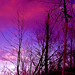 My Wild River in Pink! - by Denis Collette...!!!